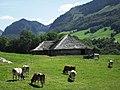Alpage avec bétail près de Châtel-sur-Montsalvens.jpg