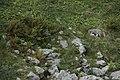 Alpine marmot - Marmota marmota - panoramio (5).jpg