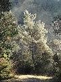 Alta Garrotxa-Morning Fog in Llierca Valley1.jpg