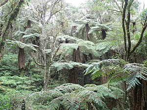 Amboró National Park - Amboro is noted for its many large ferns.