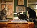 American Gothic - Cats - panoramio.jpg