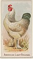 American Light Brahma, from the Prize and Game Chickens series (N20) for Allen & Ginter Cigarettes MET DP835050.jpg