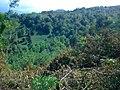 Amlash - panoramio (1).jpg