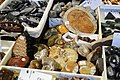 Ammonite fossils (4715545497).jpg