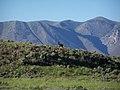 An Elk - panoramio.jpg