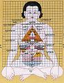 Anatomical grids (3750429856).jpg