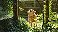 Angry Dog - panoramio.jpg