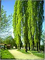 April Parc Natural Freiburg Germany - Master Landscape Rhine Valley Photography 2014 Landgut Mundenhof - panoramio (47).jpg