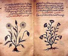 Arabic herbal medicine guidebook.jpg