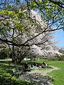 Arboretum Zürich 2012-04-02 14-58-34 (P7000).jpg
