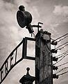 Auschwitz main gate detail.jpg