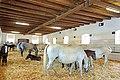 Austria-01113 - Mares and Foals (21463209278).jpg