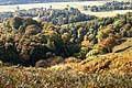 Autumn Colours - geograph.org.uk - 1565598.jpg