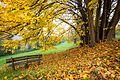 Autumn in Pellegrino Park.jpg