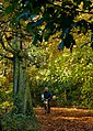 Autumn in the Park IMG 7744 - panoramio.jpg