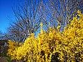 Autumn leaves golden.jpg