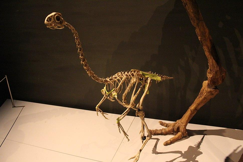 Avimimus at TyrannosaursMeetTheFamily