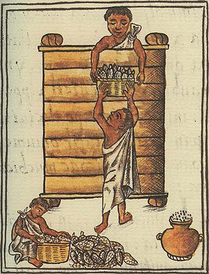 Aztèques stockant du maïs; illustration du Codex de Florence.