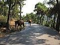 Büyükada istanbul türkiye - panoramio (1).jpg