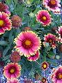 BCBG Flowers 19.jpg