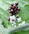 Baby shield bugs.jpg