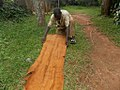 Back cloth preparation from a fig tree in Uganda 05.jpg