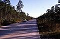 Bahamas 1988 (248) New Providence Bahamian Pine Forest (24044651185).jpg