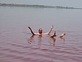 Baignade au lac rose - panoramio.jpg