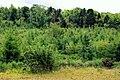 Ballysallagh forest, Craigantlet (2) - geograph.org.uk - 1925827.jpg