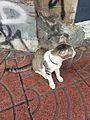 Bangkok kitty - 2017-05-12 (001).jpg