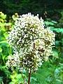 Bees - panoramio (2).jpg
