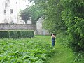 Behind the maze at Traquair House - geograph.org.uk - 105026.jpg