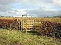 Bellstane Woodland - geograph.org.uk - 154620.jpg