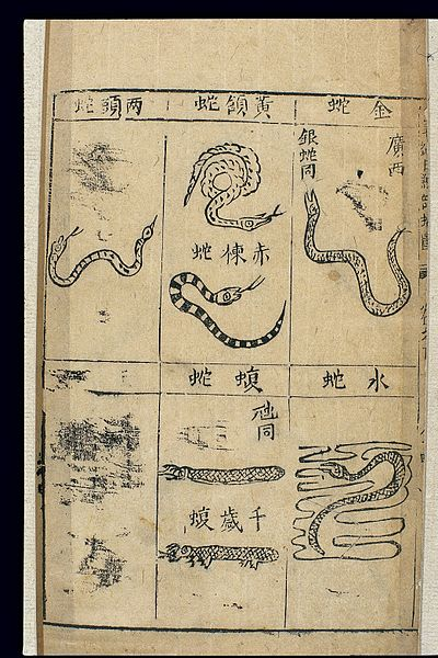 seven types of snakes from a 1st edition of Bencao Gangmu, illustrated by Li Shizhen's son (c. mid-16th century AD) - Compendium of Materia Medica