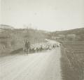 Berger et son troupeau dans le Var vers 1900 plaque de verre.png