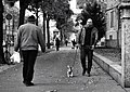 Beware of the dog ! (21686264044).jpg