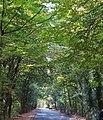 Biegwald Frankfurt-Rödelheim (5).jpg