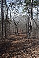 Big Hill Pond State Park trail 4.jpg