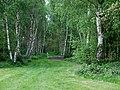 Birch woods near Chesterton, Shropshire - geograph.org.uk - 1302295.jpg