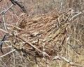 Bird's Nest - Guelph, Ontario 2020-04-11 (02).jpg