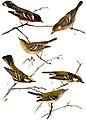 Bird-Lore-6-5 0184.jpg