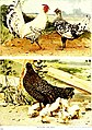 Bird studies for home and school; sixty common birds, their habits and haunts (1911) (14728178446).jpg