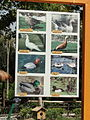 Birds Garden of Isfahan 35.JPG