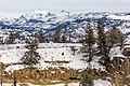 Bison and Cutoff Peak From Calcite Springs Overlook (32149878321).jpg
