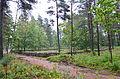 Björketorps kolerakyrkogård från väster.JPG