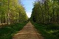 Black Wood - geograph.org.uk - 164890.jpg