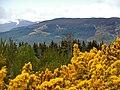 Blackmuir Wood - panoramio (2).jpg