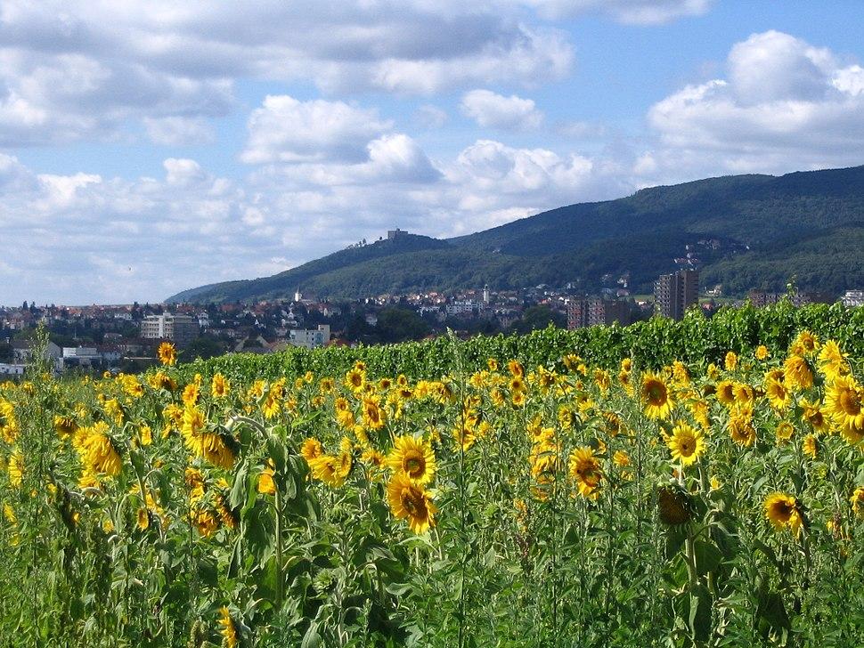 Blick auf neustadt hambach