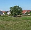 Bockenheim - panoramio (2).jpg
