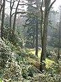 Bodnant Garden - geograph.org.uk - 432674.jpg